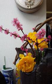 春のお花~