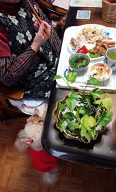 お昼ご飯 春の蕗寿司2