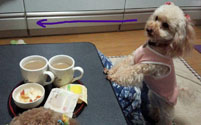 事務所お茶時間 1
