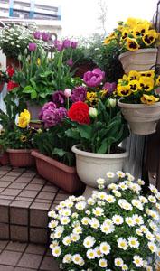雨上がりのお花