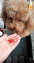 いちごを食べる!2