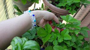 朝の収穫タイム3