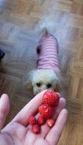 朝の苺タイム2