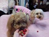 わんこの苺 2