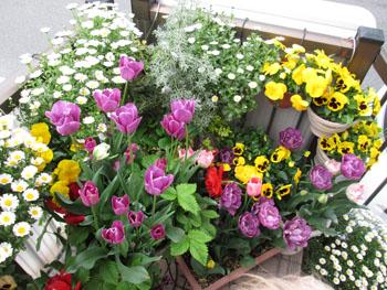 14 入口のお花 1