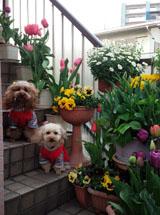 春の階段記念写真a
