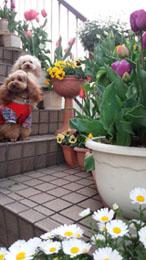 春の階段記念写真b