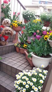 春の階段記念写真c