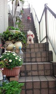 親子階段で 2