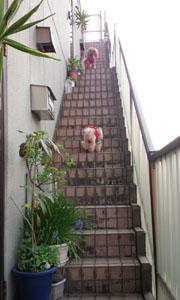 親子階段で 4