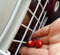 赤い実 みーつけ 12