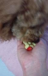 苺だよ?6