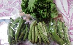 母用土産野菜