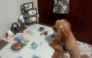 夕方のお茶時間1