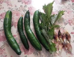 新鮮野菜頂き物