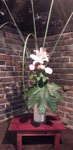 今日の迎花