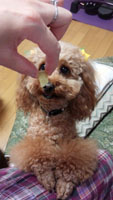 Let's お芋タイム5