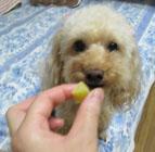 芋芋タイム3