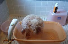 いざいざ洗犬3