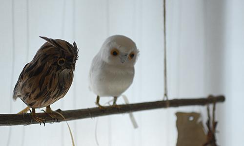owl06011_3.jpg