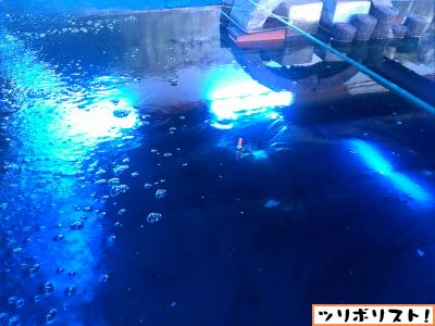つり道場太公望017