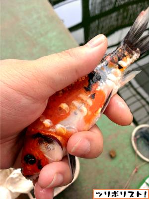 せきね養魚場022