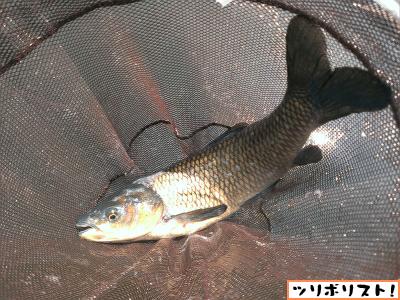 つり堀武蔵野園020