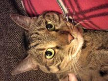 シャマラン(猫)の誕生月