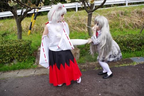ダム桜12