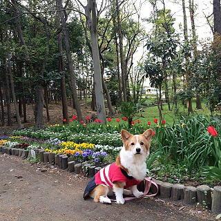春ですねぇ(1)