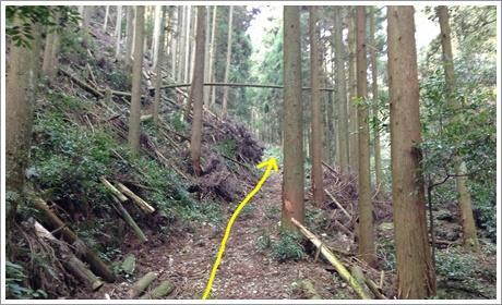 mitsugashira002.jpg
