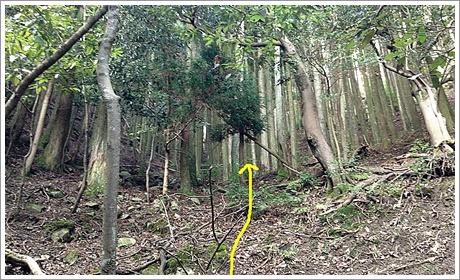 mitsugashira013.jpg