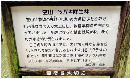 tsubaki_fes003.jpg