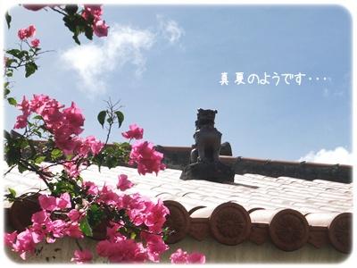 2014_07040004.jpg