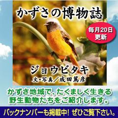 kazusa2014-02.jpg