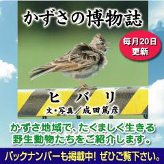 kazusa201404.jpg