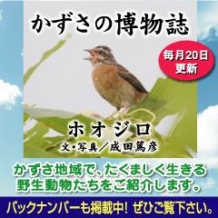 kazusa201405.jpg