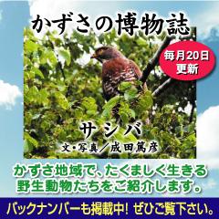 kazusa201406.jpg