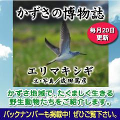 kazusa201408.jpg