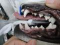 DSC06438.JPG きれいな歯