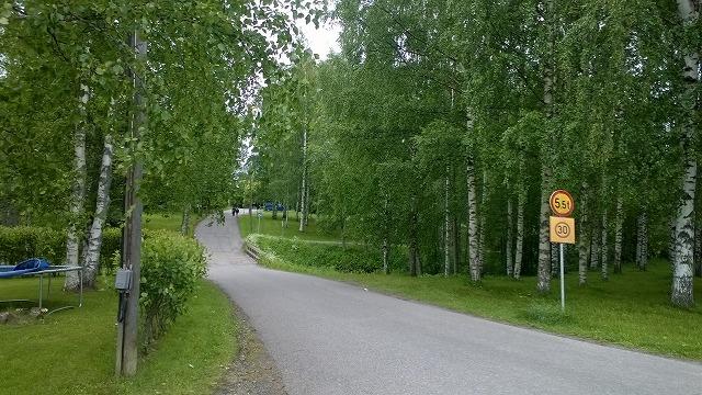 緑の中の橋