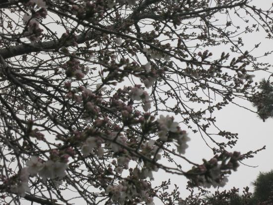 2014.3.27神奈川1