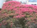 2014.4.1沖縄9