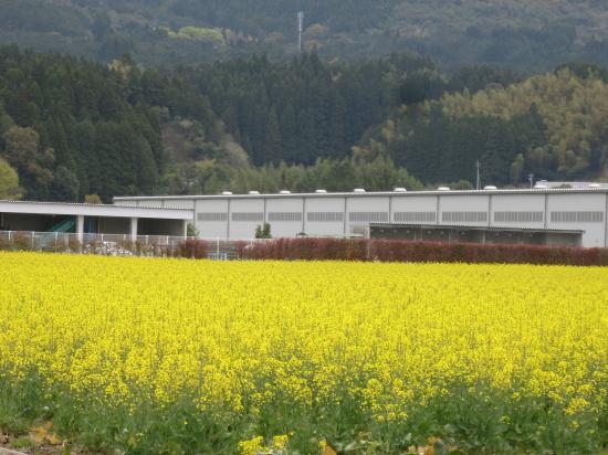 2014.4.3宮崎・鹿児島6