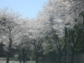 2014.4.7栃木8
