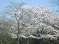 2014.4.8埼玉3