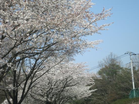 2014.4.8埼玉4