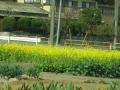 2014.4.8埼玉5