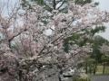 2014.4.16東京・神奈川2