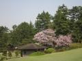 2014.4.17神奈川1